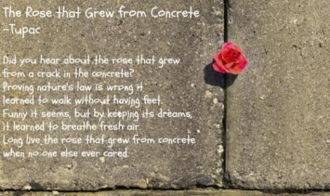 therosethatgrewfromtheconcrete